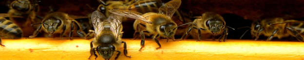 Introduction to Beekeeping @ Smithers Public Library